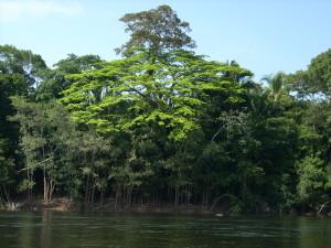 Floresta aluvial das margens do rio Teles Pires
