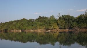 Formações Ripárias à margem do rio Teles Pires