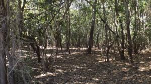 Interior de uma Formação Ripária, com abundante serapilheira e sub-bosque ralo